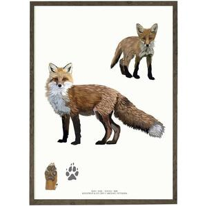 ART PRINT - Fox - CHOOSE SIZE