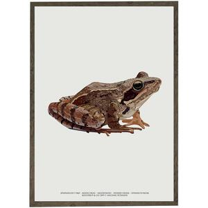 Moor frog - ART PRINT - CHOOSE SIZE