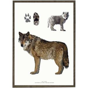 ART PRINT - Wolf - CHOOSE SIZE
