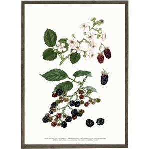 ART PRINT - Brambles - CHOOSE SIZE
