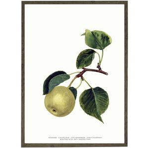 ART PRINT - Pear - CHOOSE SIZE