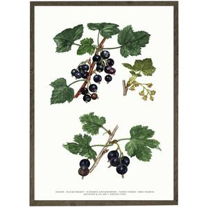 ART PRINT - Blackberry - CHOOSE SIZE