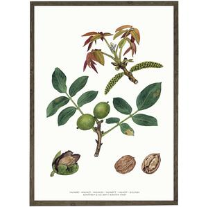 ART PRINT - Walnut