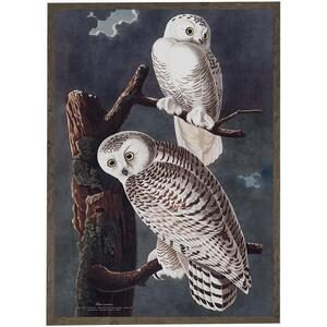 ART PRINT - Snowy owl - CHOOSE SIZE