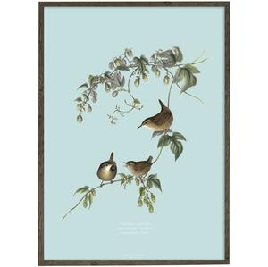 Wren - ART PRINT - CHOOSE SIZE