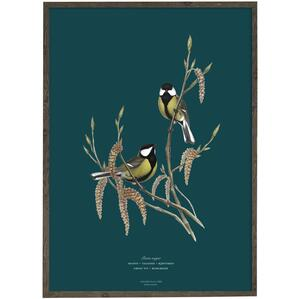 Great tit (petrol) - ART PRINT - CHOOSE SIZE