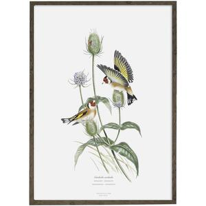 Goldfinch - ART PRINT - CHOOSE SIZE