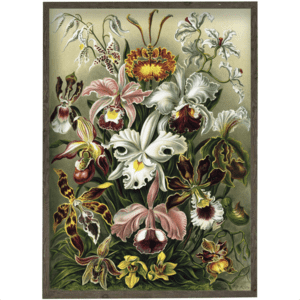 ART PRINT - Orchids - CHOOSE SIZE
