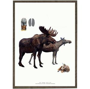 ART PRINT - Moose - CHOOSE SIZE