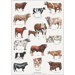 CATTLE BREEDS - Poster A2