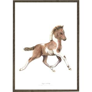 Foal - ART PRINT - CHOOSE SIZE